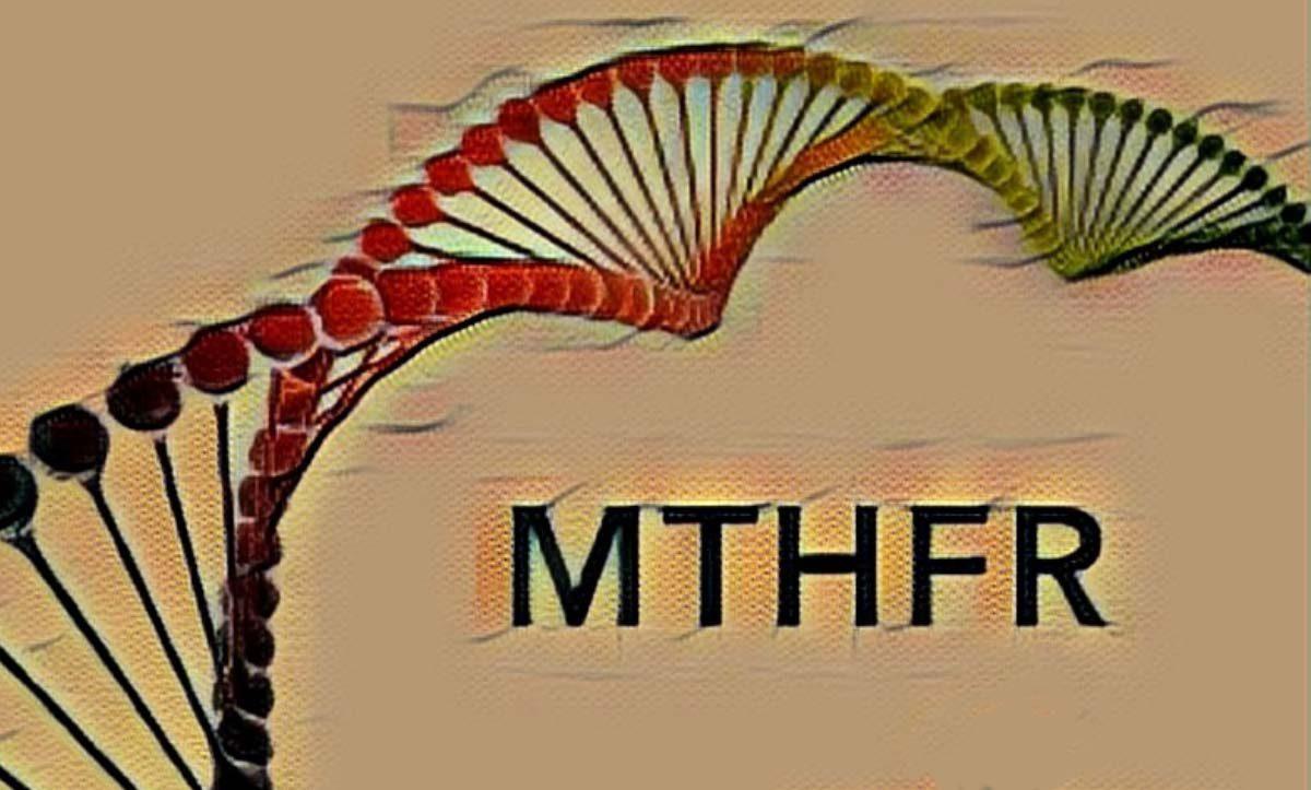 mthfr a1298c heterozigot
